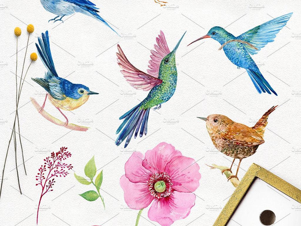 高清水彩手绘小鸟插画合辑免抠png设计素材