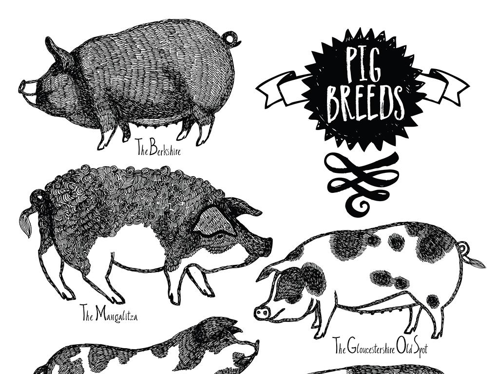 手绘猪速写插画矢量素材