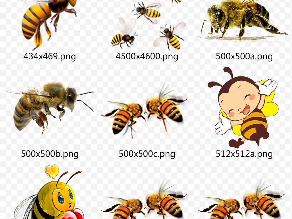 卡通可爱小蜜蜂蜂蜜采蜜设计元素png素材图片