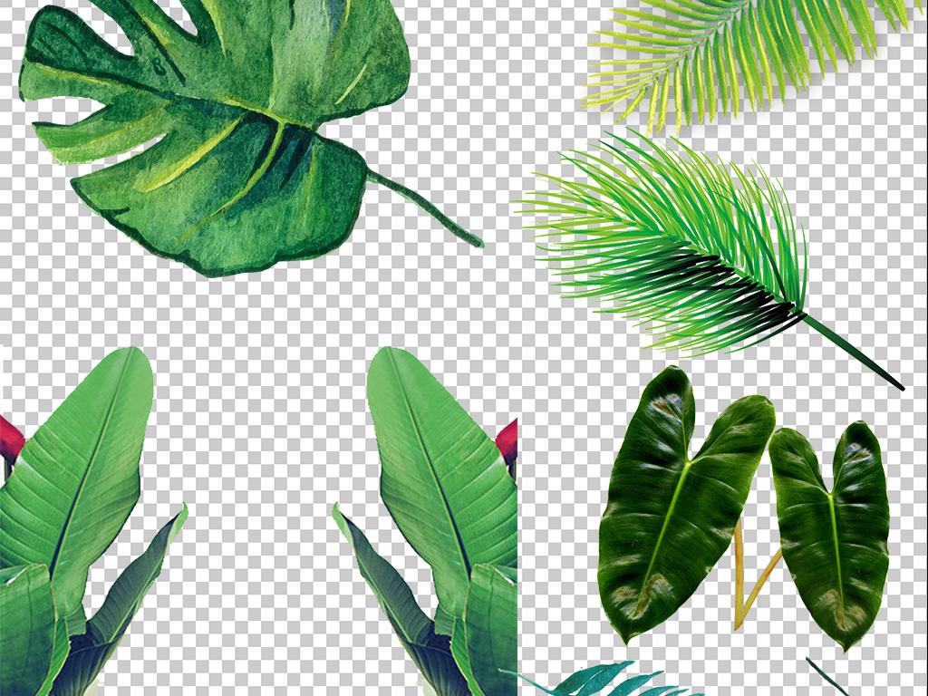 北欧小清新叶子植物龟背叶素材