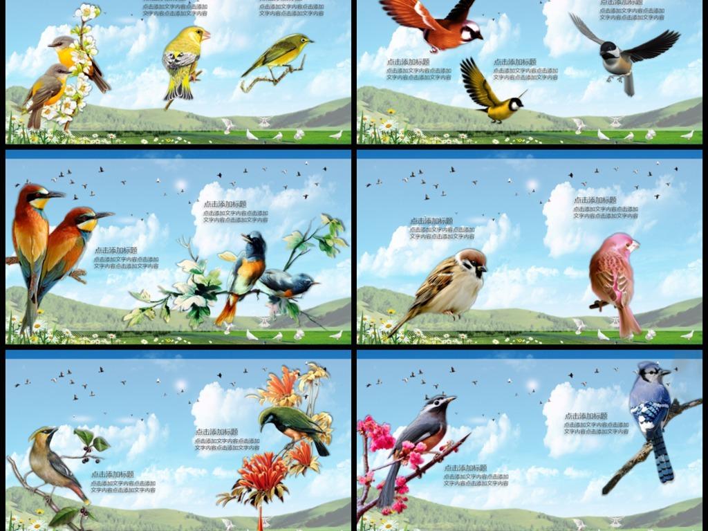 公益动物园鸟类主题爱鸟节ppt模板