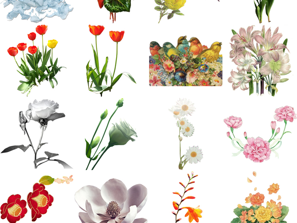 梅花手绘花朵