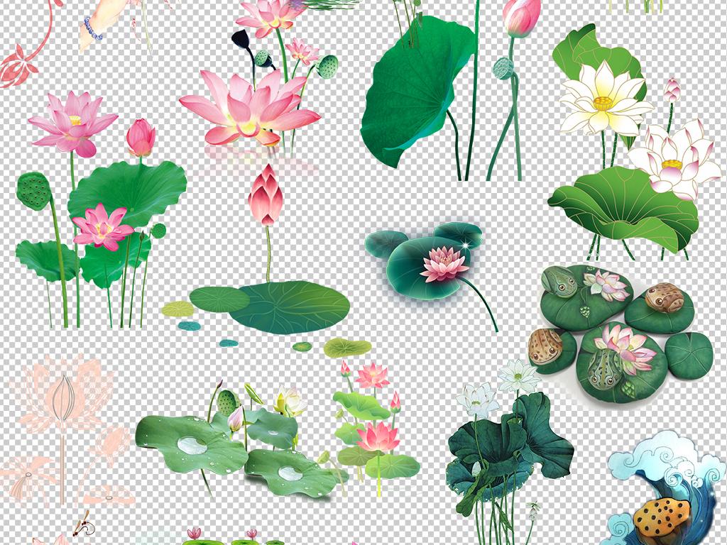 荷花手绘水墨荷叶图片背景PNG素材莲花图片下载png素材 花卉图片