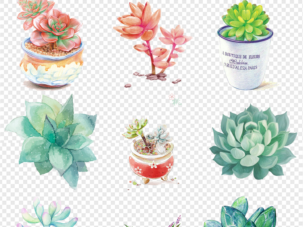水彩手绘多肉植物花朵png免扣素材图片下载png素材