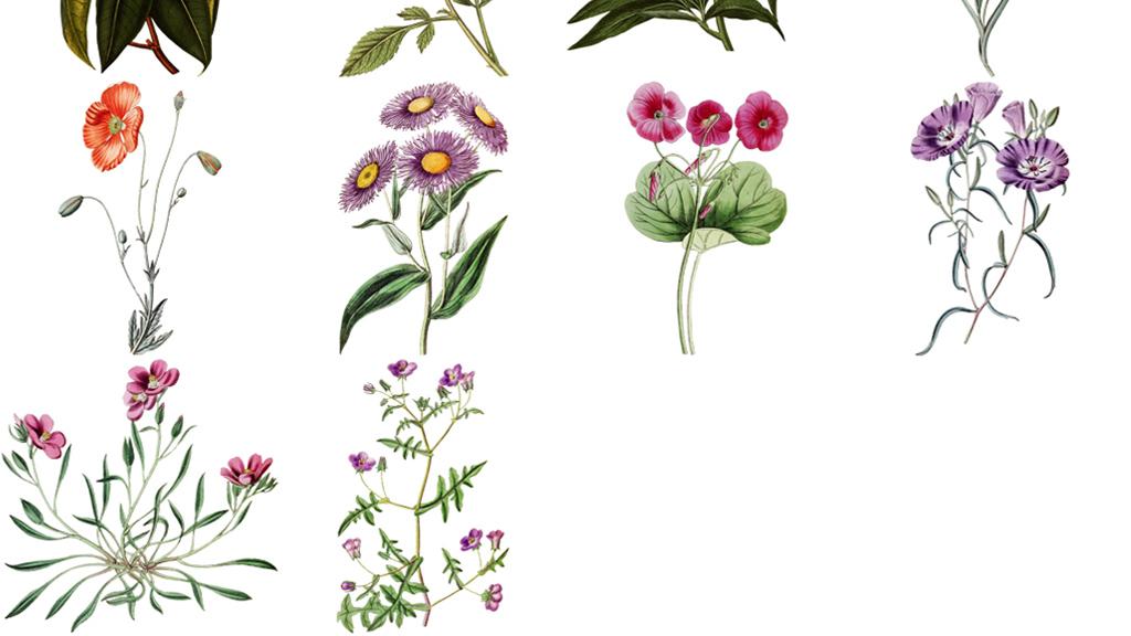 50款古风手绘花朵png透明素材