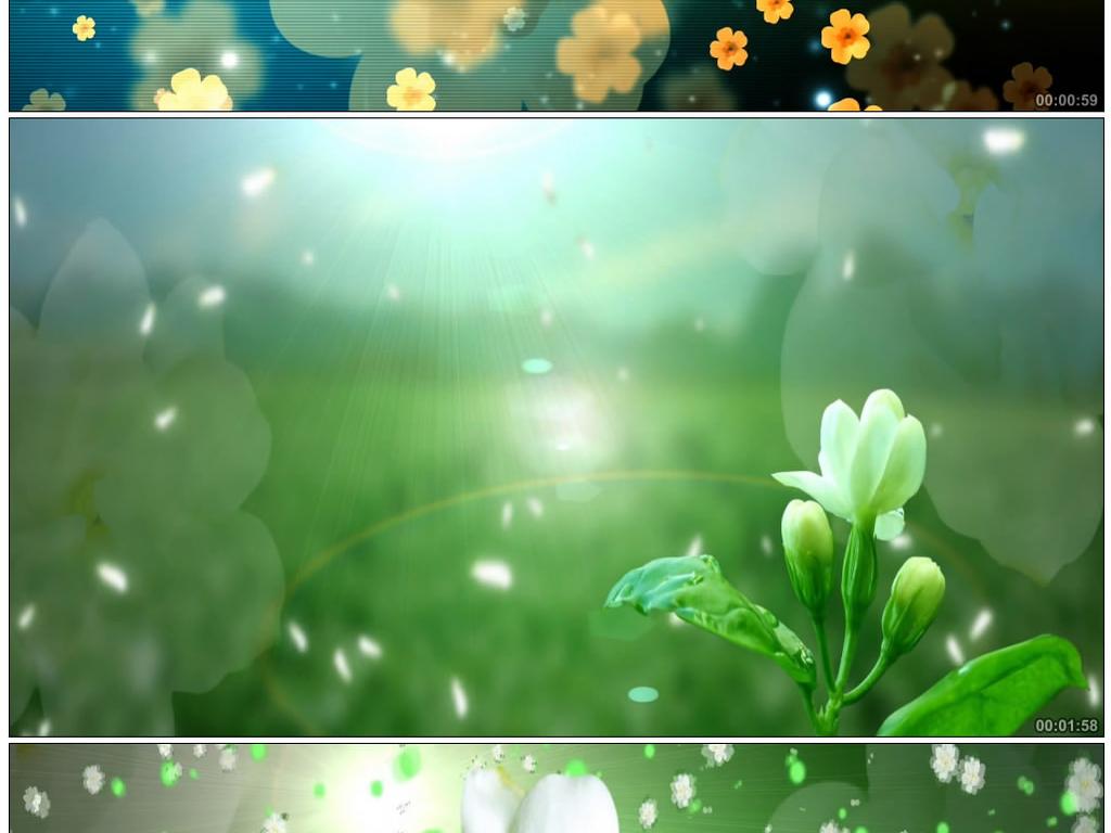 唯美茉莉花花瓣飘落背景视频素材