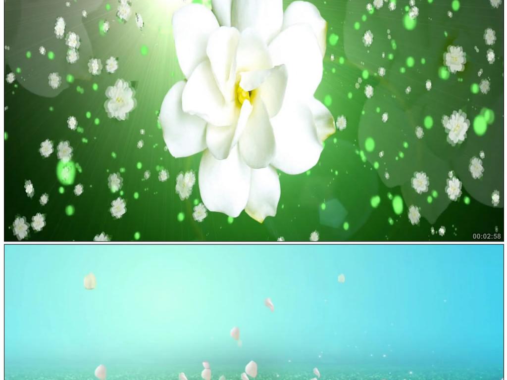 唯美茉莉花花瓣飘落背景视频素材模板 高清格式下载 视频346.70MB 晚会演艺 背景视频大全