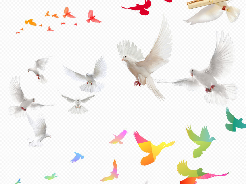 放飞梦想飞翔的白鸽鸽子信鸽PNG素材图片