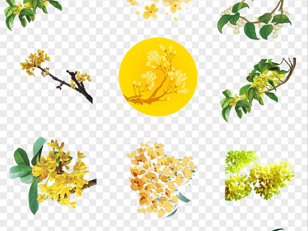 手绘桂花黄色花朵png免扣素材