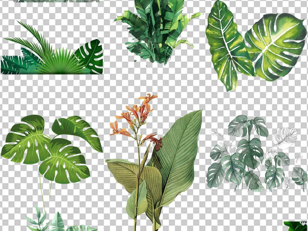 森系小清新叶子树叶热带png植物素材
