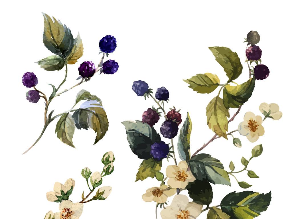 手绘水彩植物叶子果实花卉