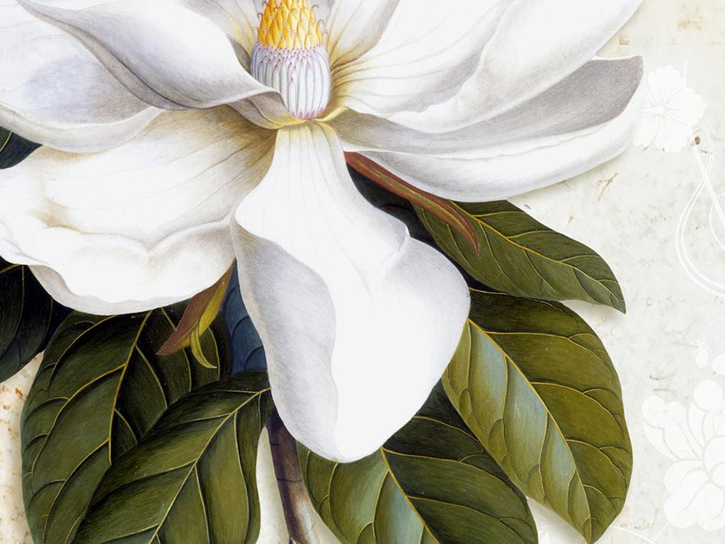手绘白色茶花复古装饰画图片