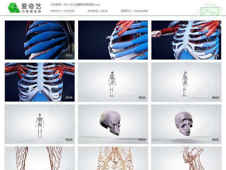 经络图经络养生中医经络人体3d视频解析