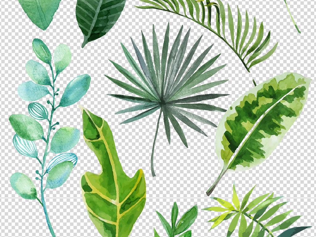 北欧小清新美式手绘插画水彩绿植设计素材