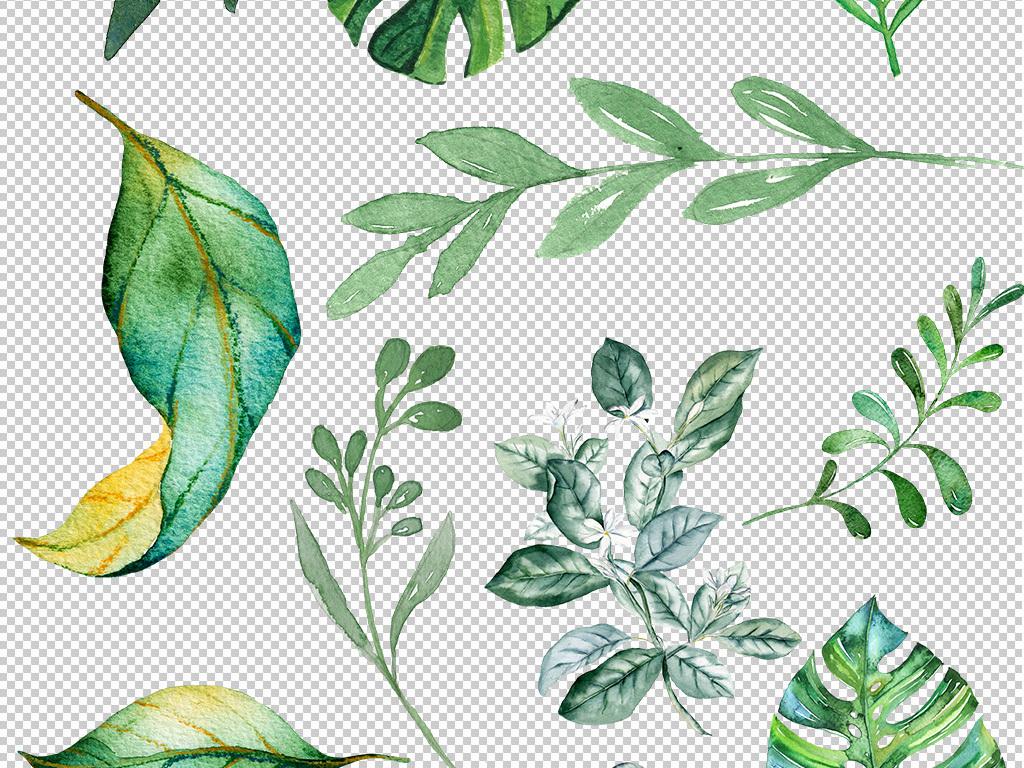 手绘叶子水彩叶子插画叶子透明免抠png图片素材_模板