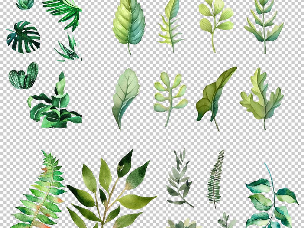 清新北欧美式手绘插画水彩绿植设计背景素