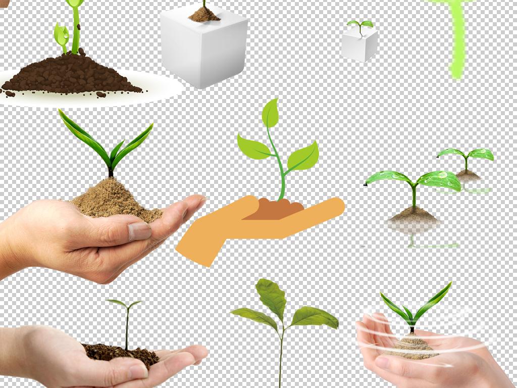 发芽素材绿色植物手绘素材树苗豆芽成长快乐成长日记快乐成长成长小树
