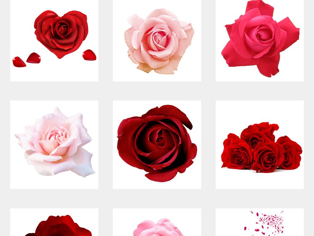 手绘玫瑰花情人节海报素材png