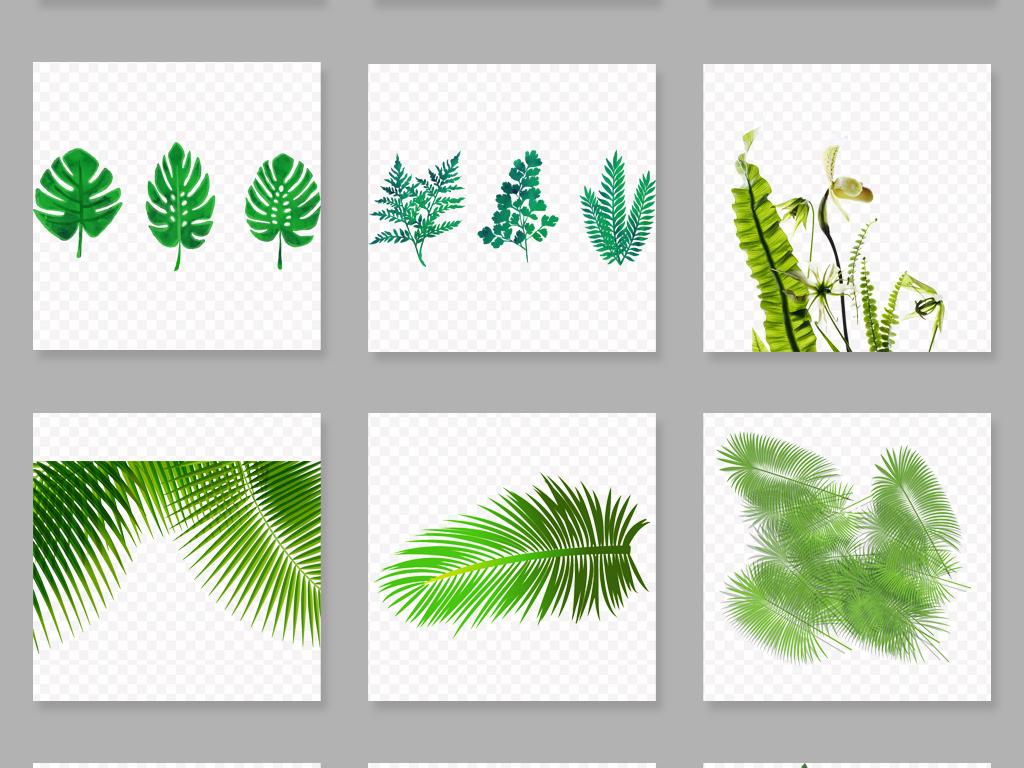 免抠元素 自然素材 花卉 > 水彩手绘芭蕉叶png免扣透明素材  素材图片