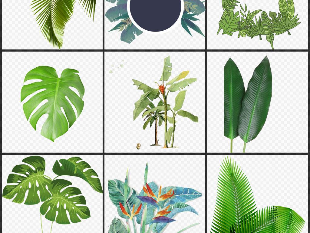 水彩手绘芭蕉叶png免扣透明素材图片