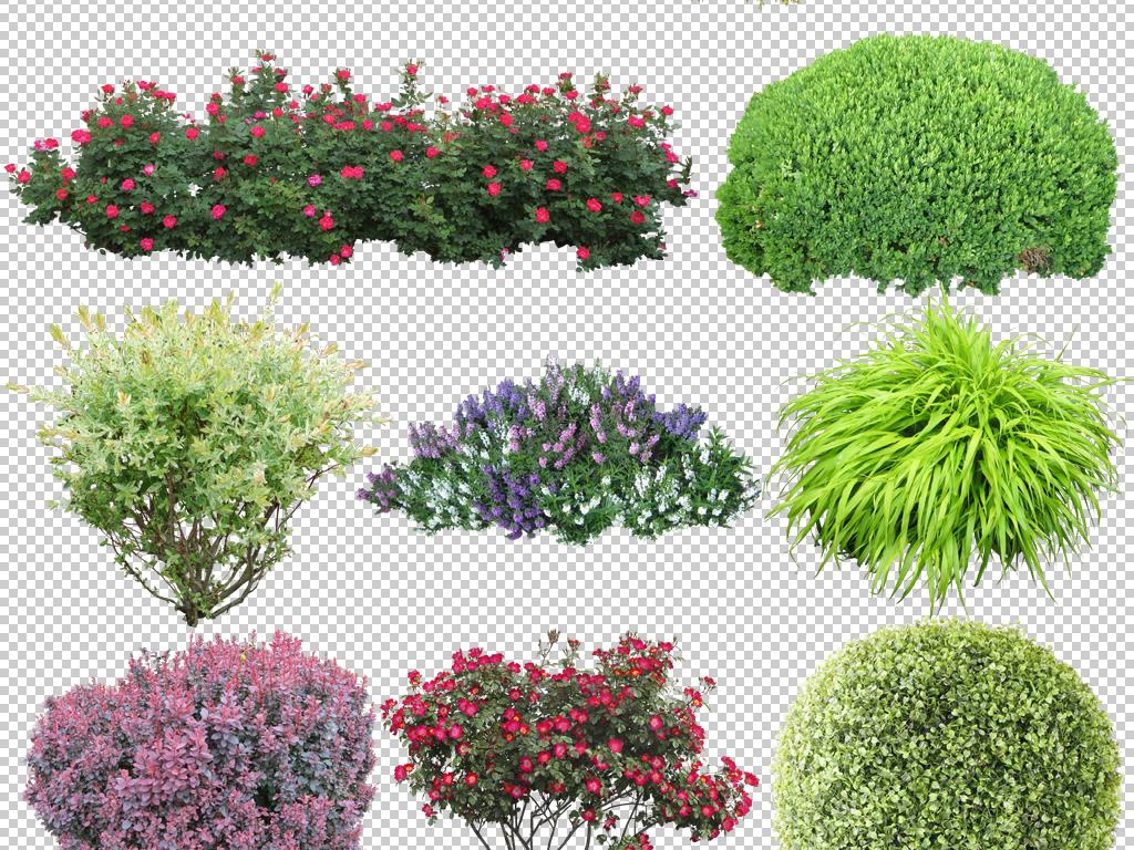 绿色灌木丛绿化灌木园林景观植物树木免扣素材