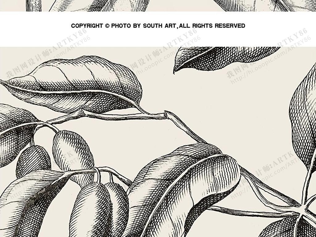 黑白装饰画植物图谱图鉴线条植物树叶装饰画