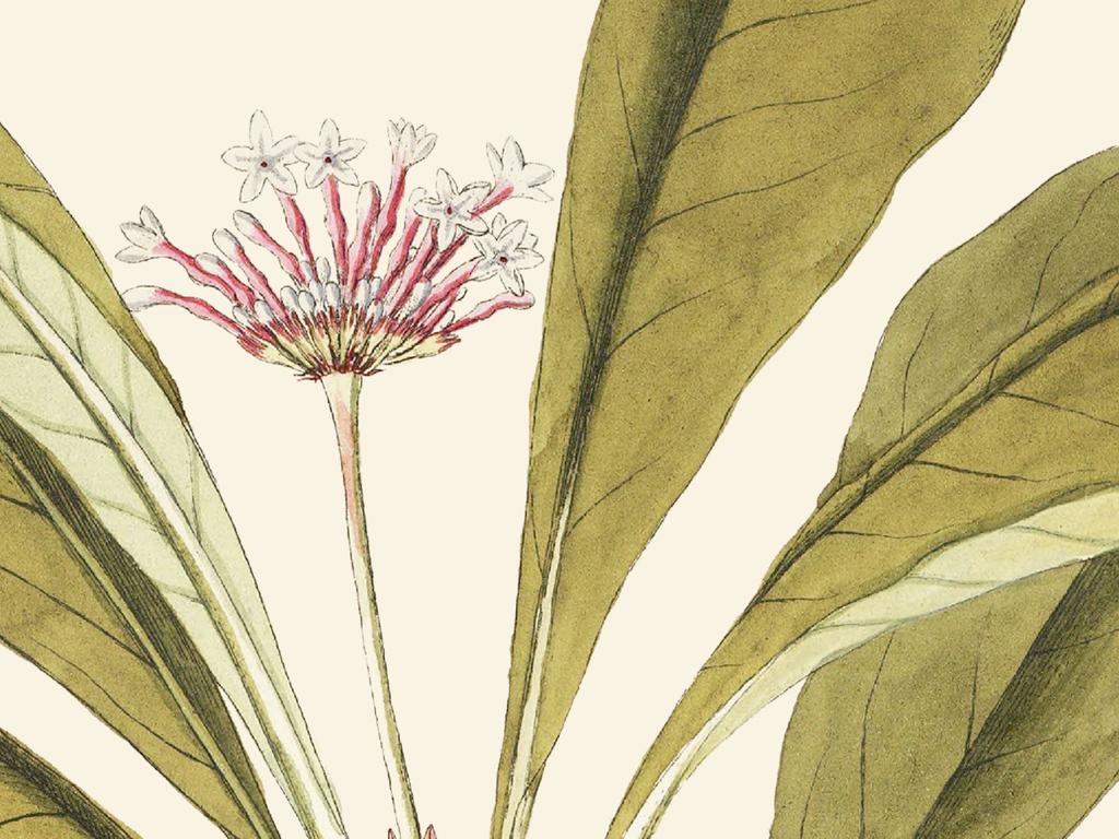 北欧手绘花卉树叶装饰画客厅无框画三联画