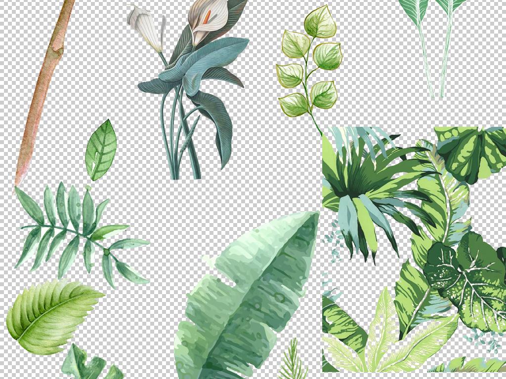 小清新北欧美式卡通手绘插画绿色植物叶子png免扣素材