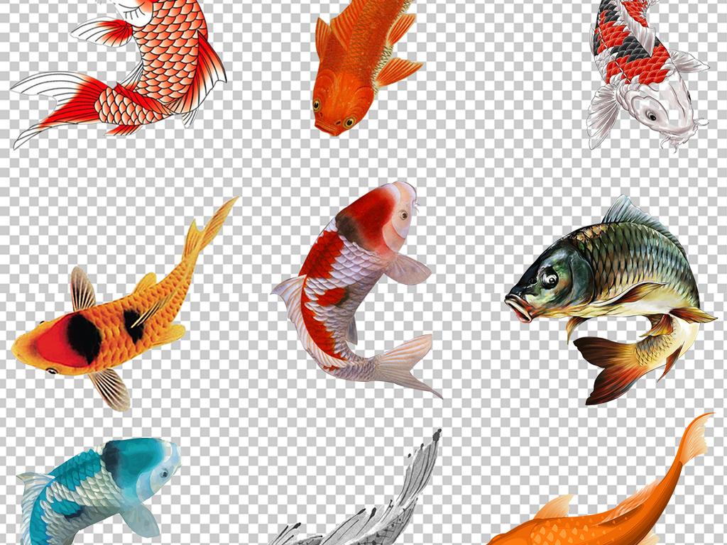 中国风古典鲤鱼锦鲤金鱼png免抠素材