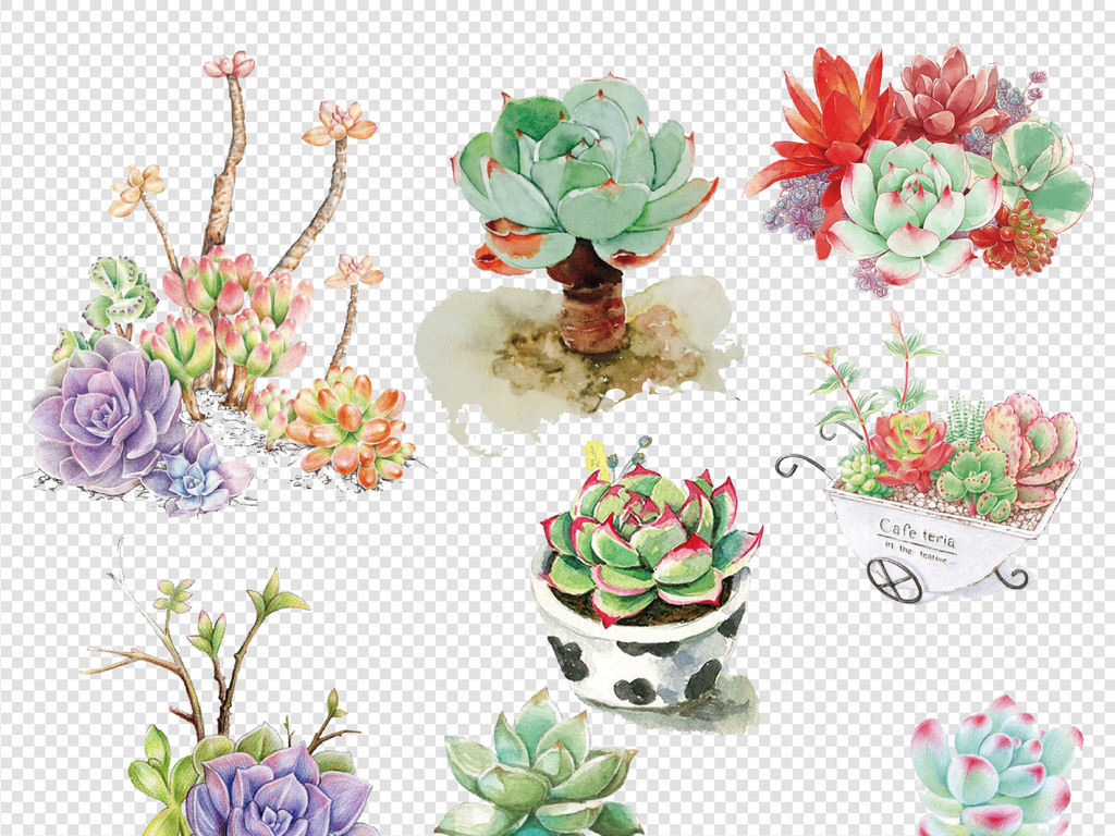 手绘小清新多肉植物png元素合集图片素材_模板下载(65