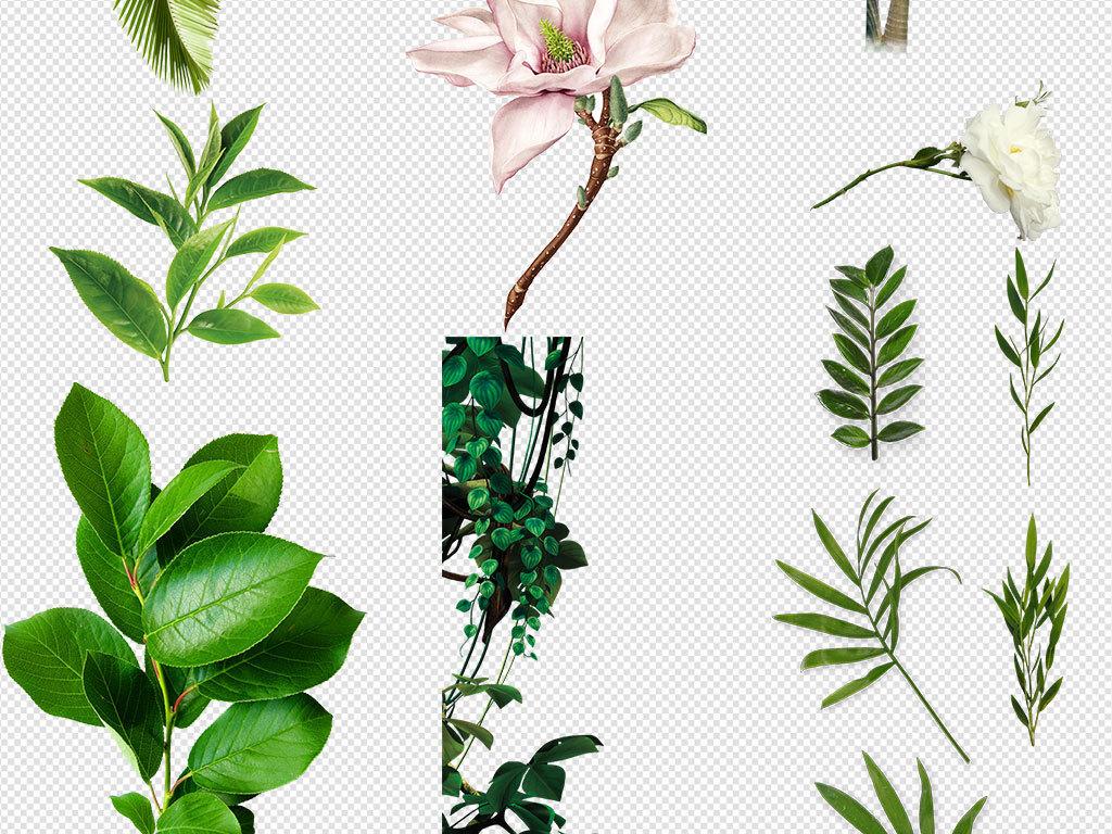 绿植清新北欧美式手绘插画水彩绿植设计背景素材
