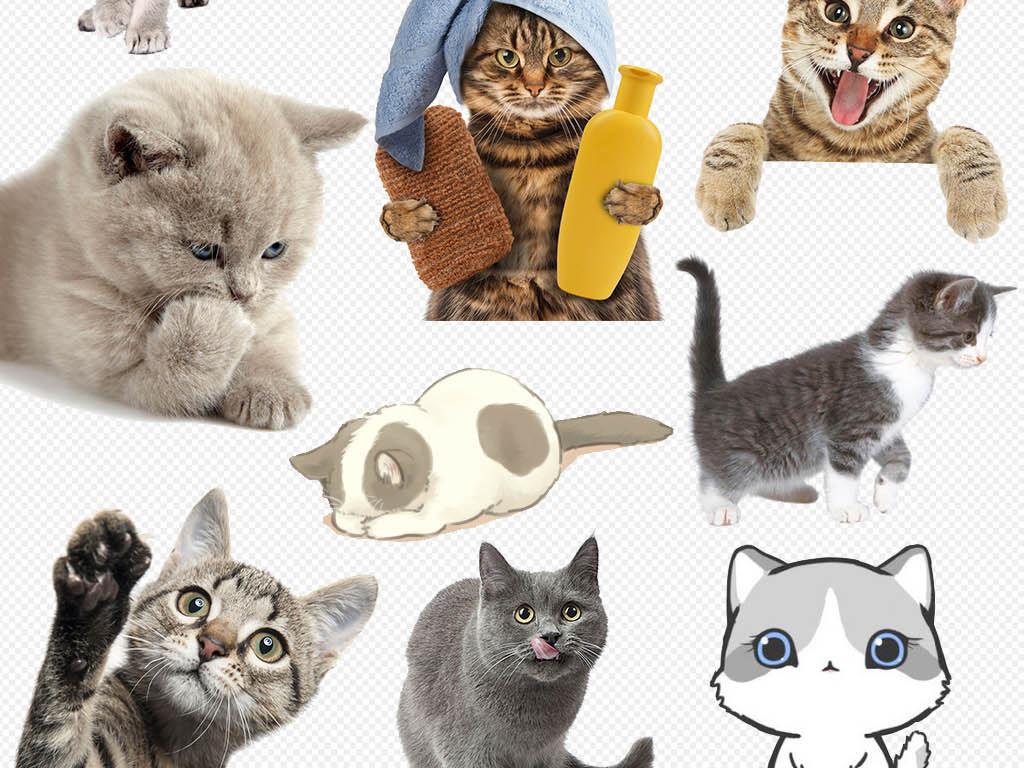卡通多款猫咪小猫宠物造型设计png素材图片