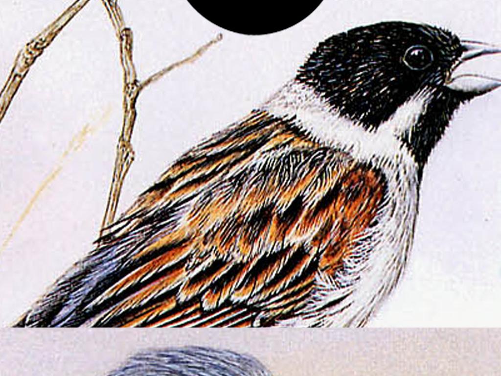 北欧创意手绘爱情鸟羽毛花鸟无框画三联画