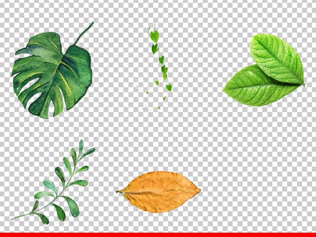 手绘插画水彩绿叶小清新绿植png设计素材