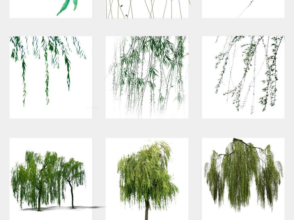 春天绿色春季柳树柳条柳叶春季夏季海报设计免扣素材图片
