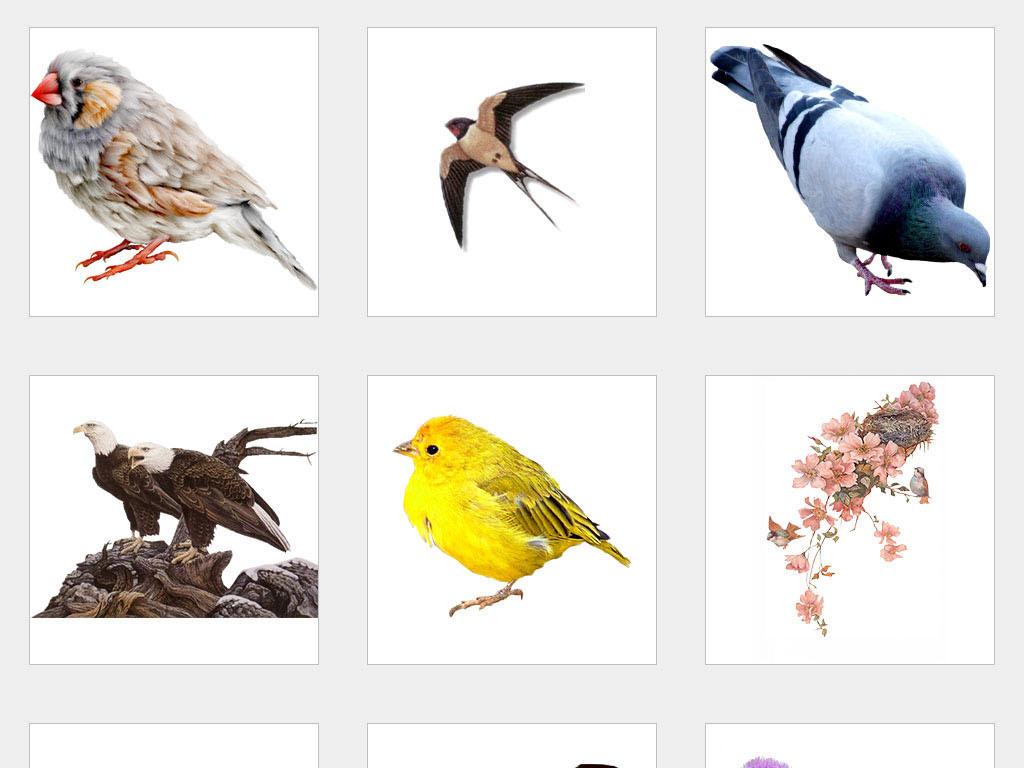 独立png/工笔花鸟素材手绘水彩鸟