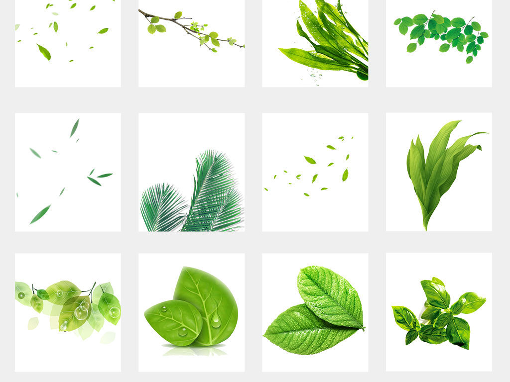 春天绿色树藤青藤藤蔓树叶花藤图片素材
