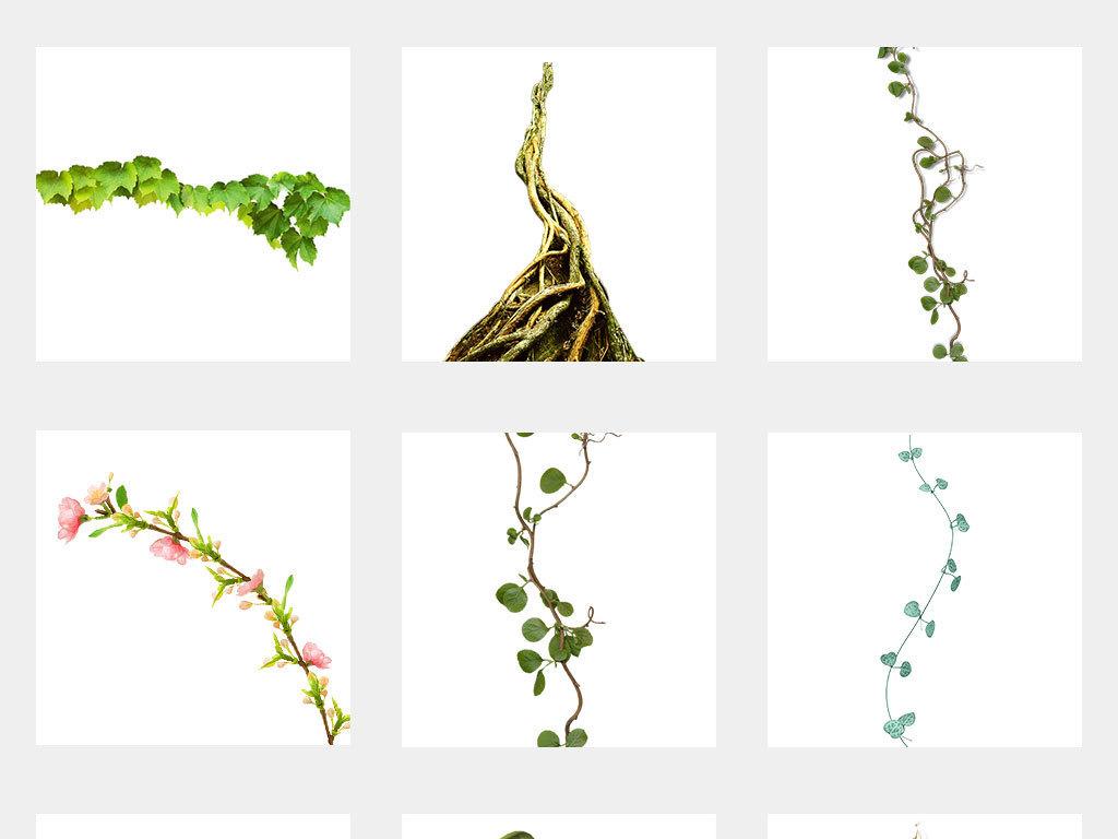 绿藤花边绿环花藤缠绕的树藤手卡通树藤树藤边框
