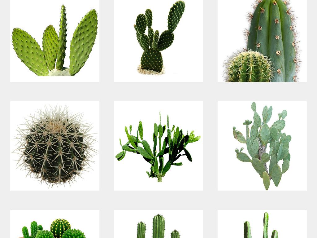 植物仙人掌免抠素材卡通仙人掌手绘仙人掌
