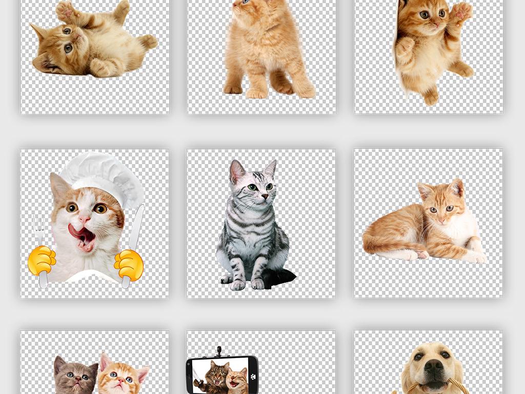 卡通动物黑白猫狗卡通狗手绘猫咪宠物猫宠物狗小狗可爱素材宠物素素材