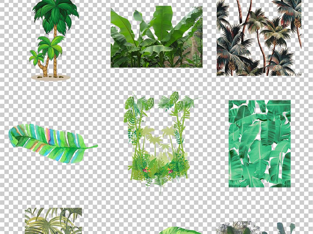 热带树叶小清新美式手绘插画水彩绿植设计