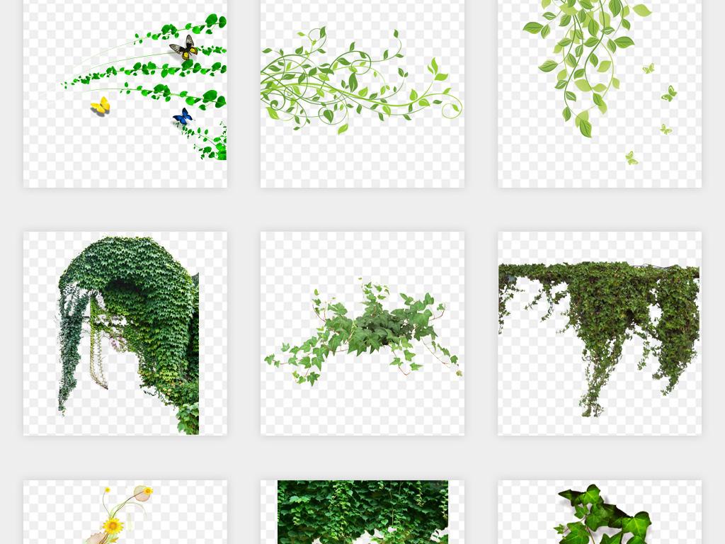 绿色树藤树叶花藤藤蔓花纹花边png免扣素材