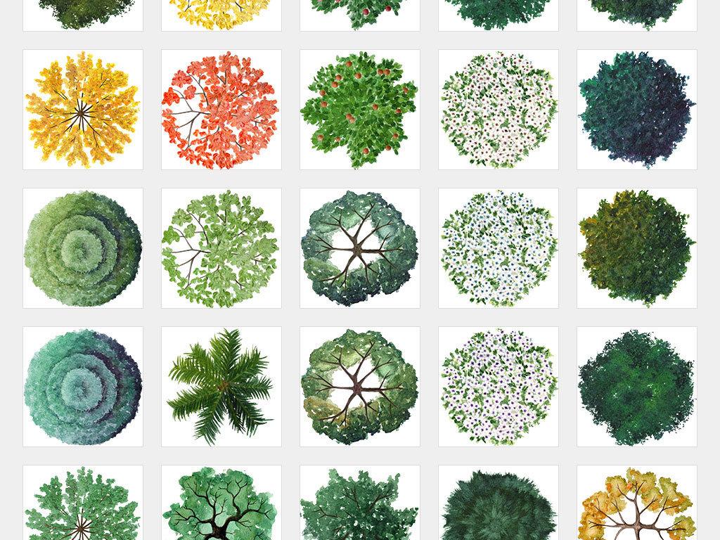 独立png/园林图库植物平面图景观绿化植物花草