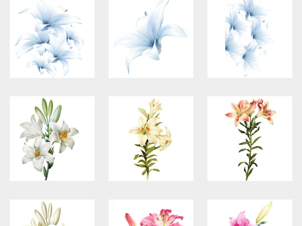 50款唯美卡通手绘百合花卉花朵花束png免扣素材