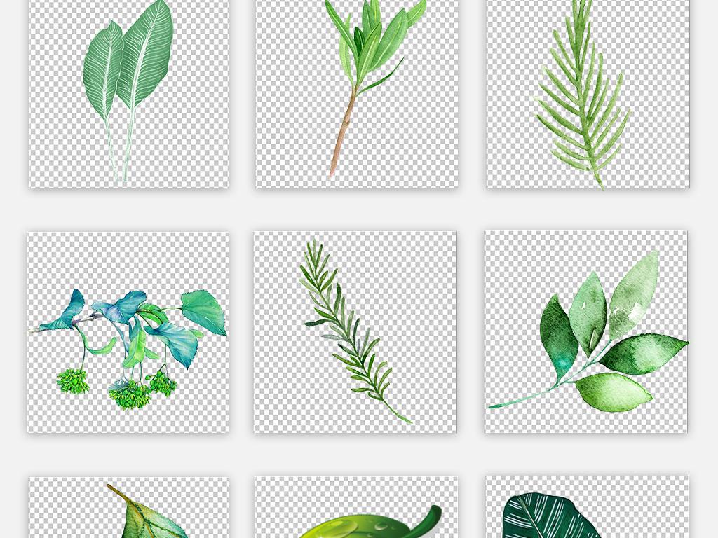 画树叶小清新水彩素材绿植手绘树叶手绘素材手绘水彩绿植素材小清新