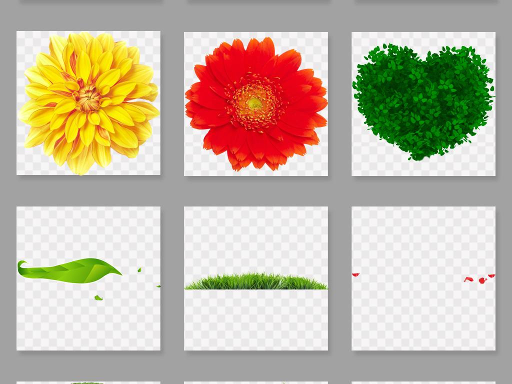 茶叶手绘植物图谱