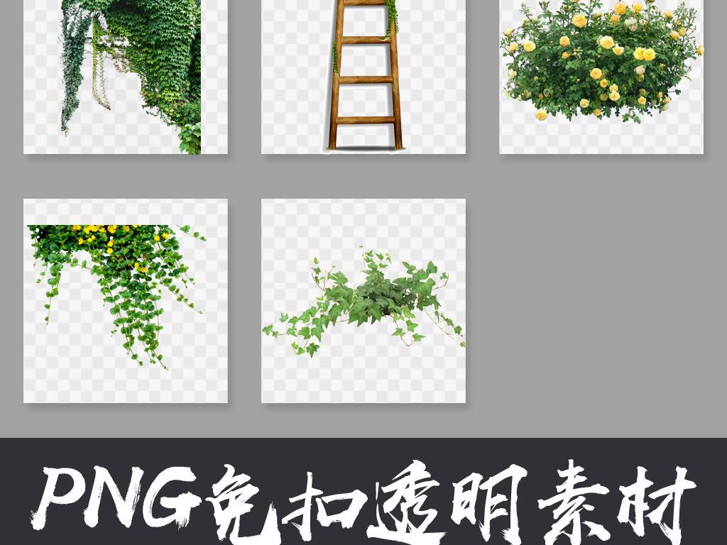 藤蔓植物藤蔓花朵藤蔓边框