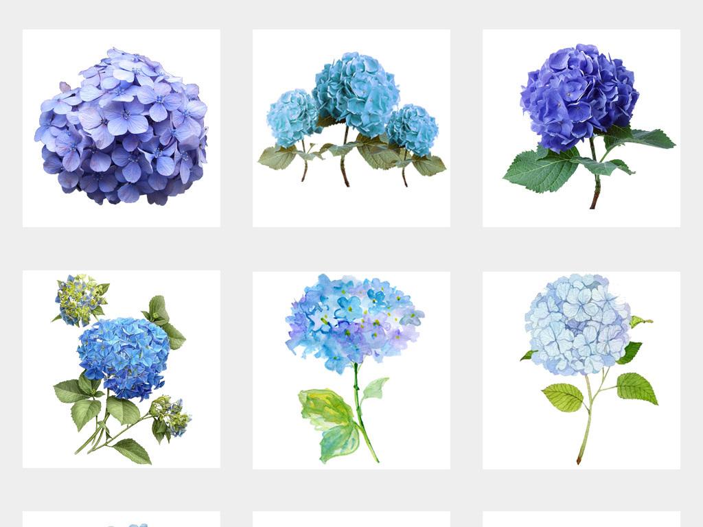 蓝色绣球花红色绣球花紫色绣球花手绘花树叶背景手绘花卉花卉卡通背景