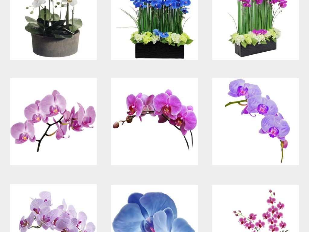 免抠元素 自然素材 花卉 > 卡通手绘唯美蝴蝶兰兰花花卉花朵png透明