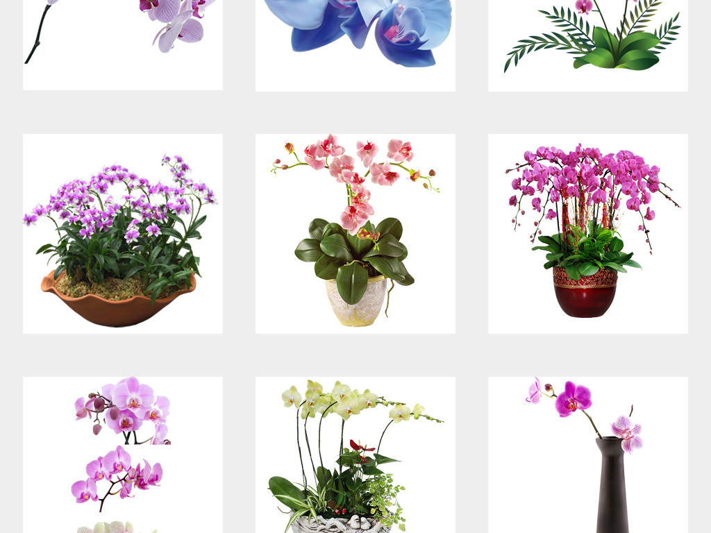 卡通手绘唯美蝴蝶兰兰花花卉花朵png透明背景免扣素材